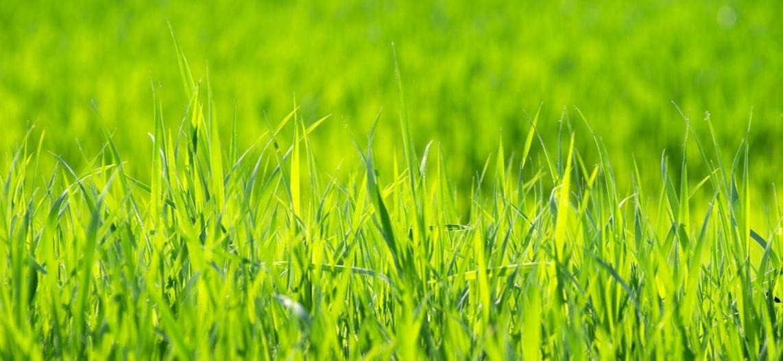 Terrain agricole en vente Gouville-sur-Mer