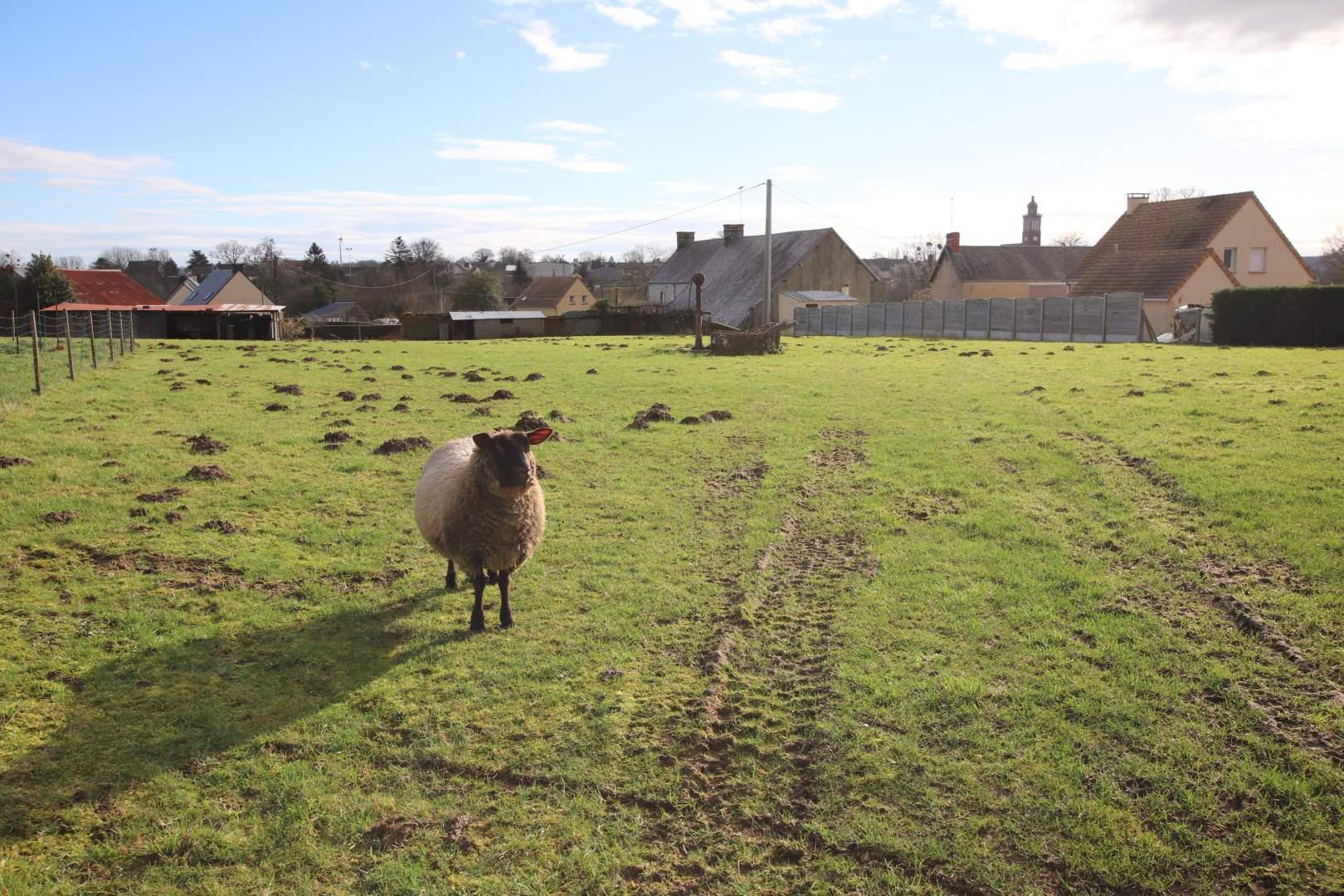 terrain en vente Saint-Amand-Villages